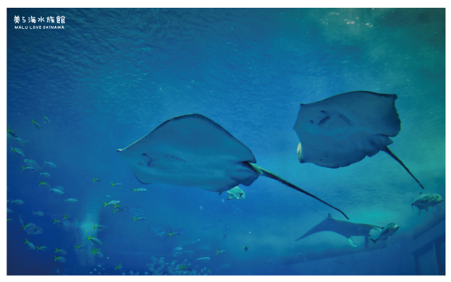 沖繩美麗海水族館-20