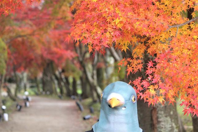 daikakuji-gosyuin079