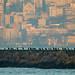Cormorants of Istanbul by aksoykaan1