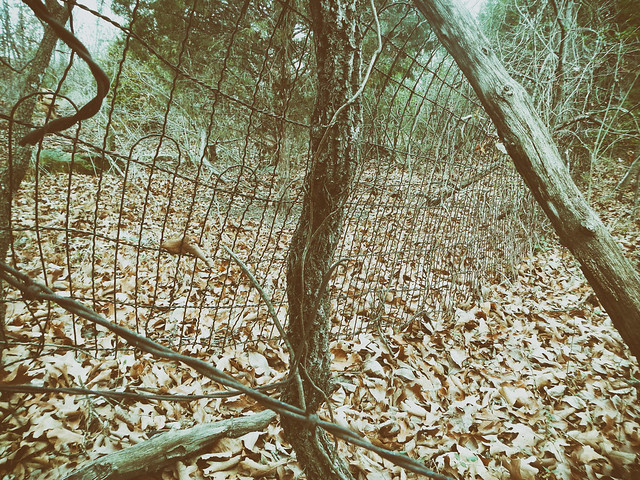 Turkey Mountain Wire fence