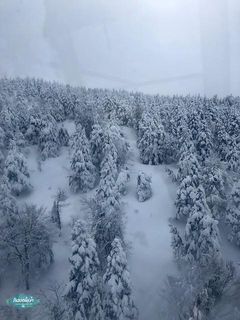 藏王樹冰半日遊