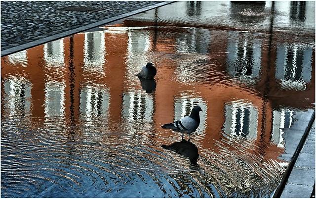 Pigeons 😉