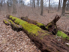 mossy logs add color to January