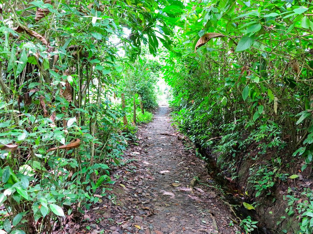 Selva en Costa Rica