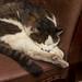 Kurashiki cat