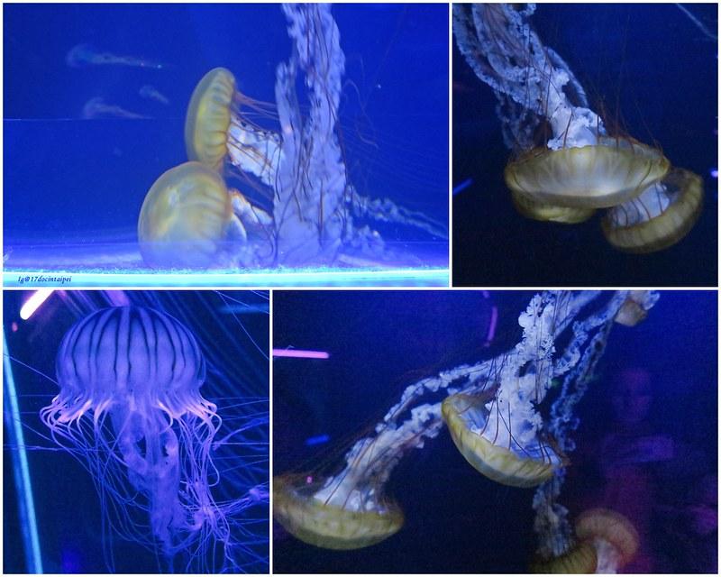 SEALIFELondon Aquarium-KLOOK客路-17docintaipei (24)