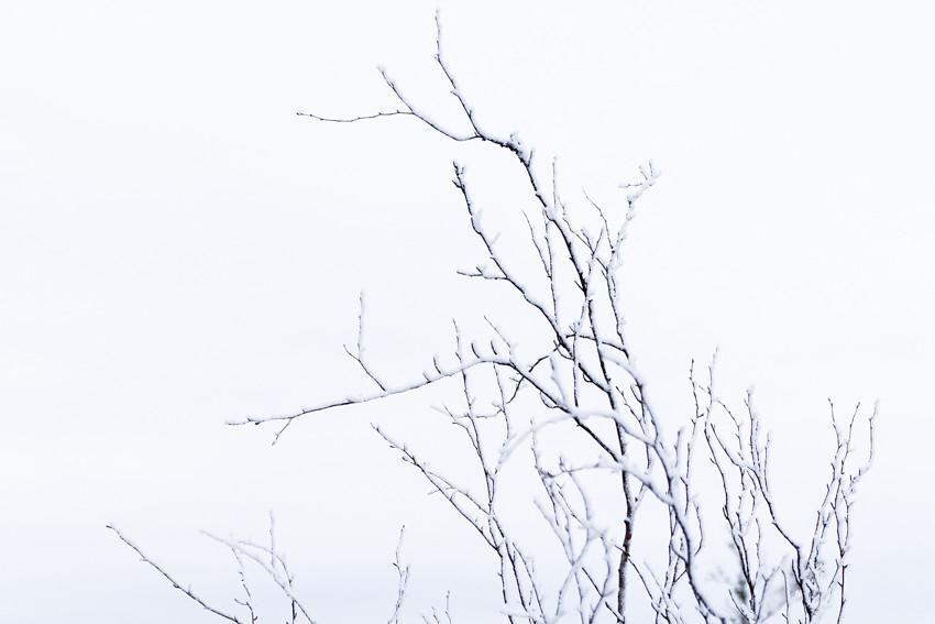 talvinen suo-2636
