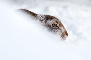 Behind the snowdrift