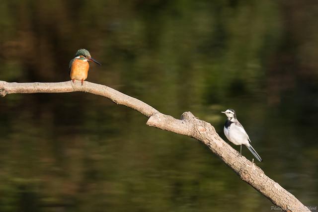 20180120-kingfisher-DSC_4908