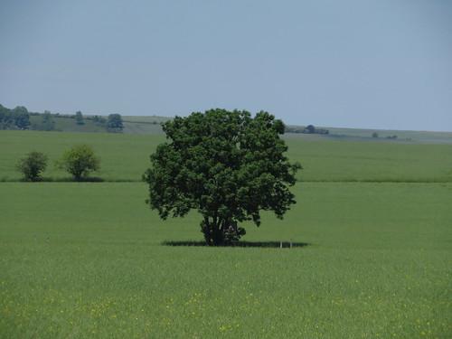20170601 05 200 Regia Bäume Baum Feld_K