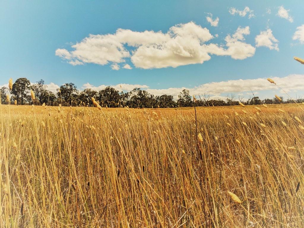 Mulligan's Woodland
