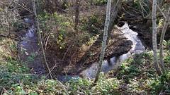 Mills Creek gooseneck, Burleigh Murray Ranch SP