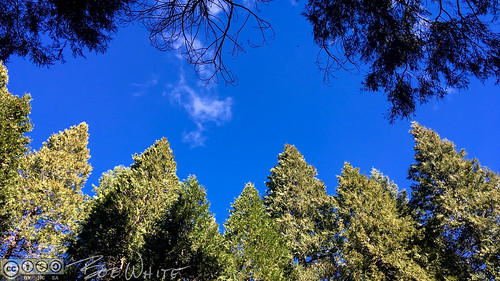 nevadacity california unitedstates us nevadacounty deercreekpark home backyard iphone6