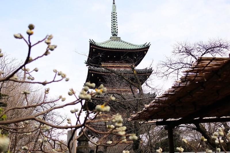 Edgeworthia Chrysantha and Five-storied Tower in Ueno Toshogu Shrine