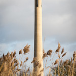 Tower in the Reeds