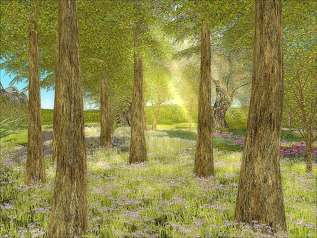 The Secret Garden -  Sunlit Woods