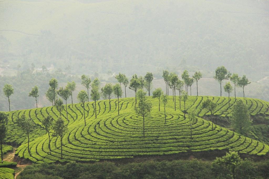 Kannan Devan Hills, Kerala