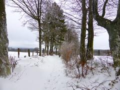 Hans Alberda - P1030865