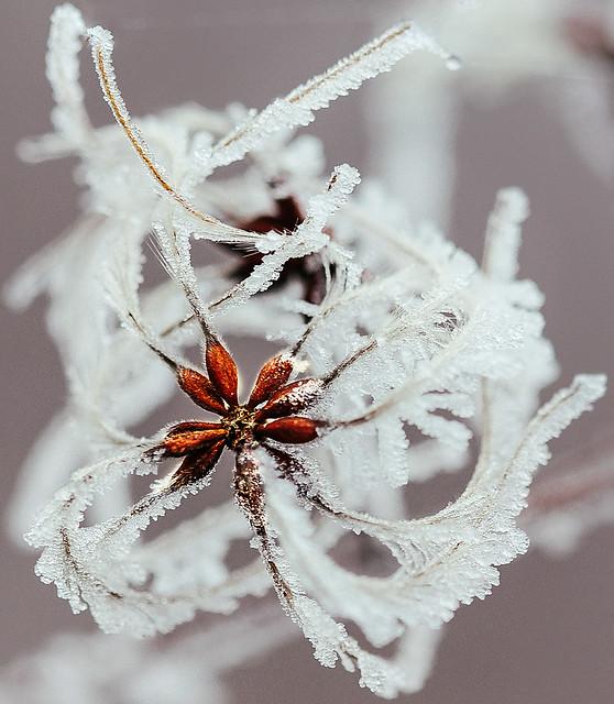 Frozen seeds