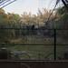 Cubbon Park crow by vruba