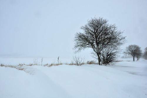 sweden sverige schweden suecia suède svezia スウェーデン snow snö schnee nieve neige neve 雪 road väg weg route camino via 道 winter vinter invierno hiver inverno 冬 white vit weis blanco blanc bianco 白