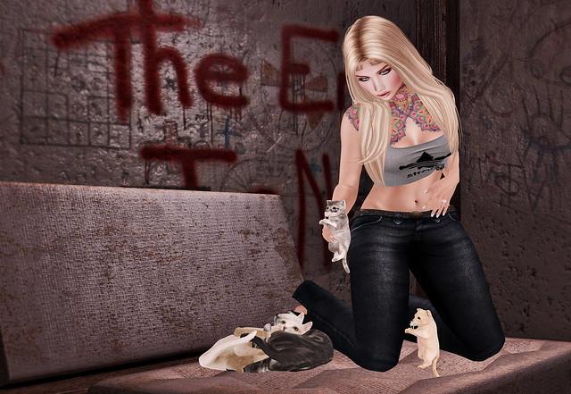 A litter of Kitties