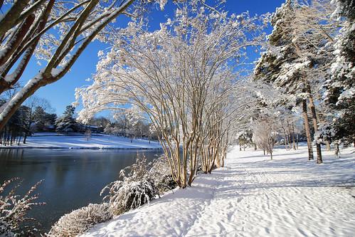 winter landscape landscapephotography trees lake gastonia northcarolina heatherlock dorameulman haiku canon7dmark11 canon