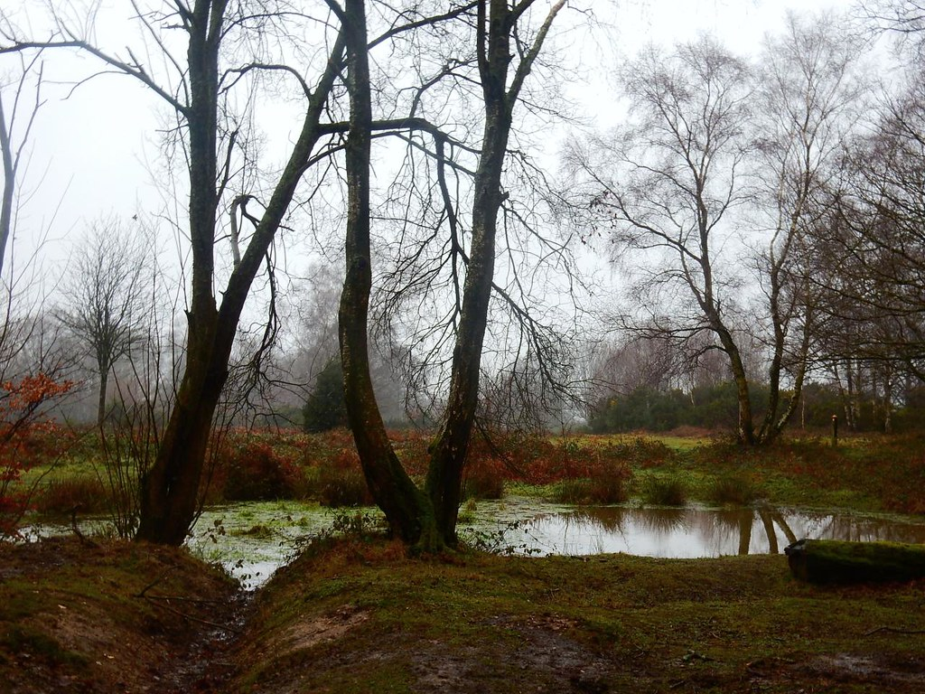 Pond on the heath Tadworth Circular