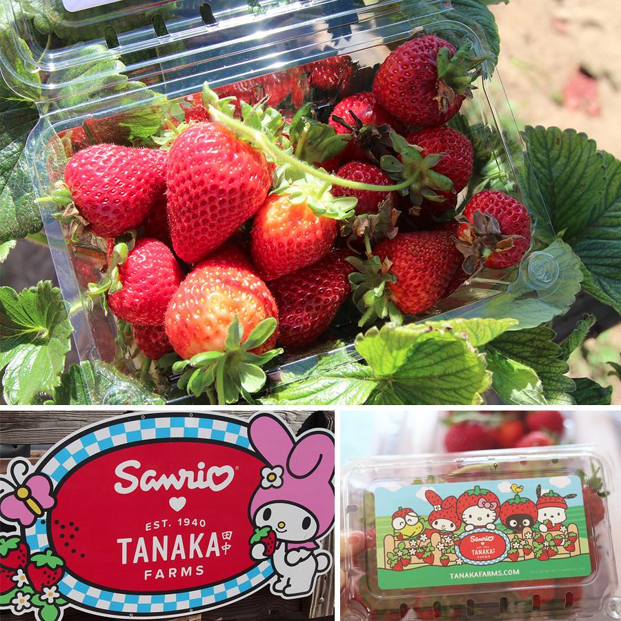 strawberry-season-2