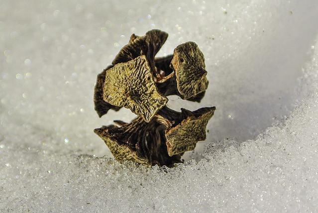 Seed on snow, Nikon 1 V1, 1 NIKKOR VR 10-30mm f/3.5-5.6