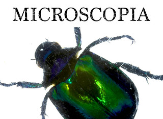 Microscopia - Promotional Still