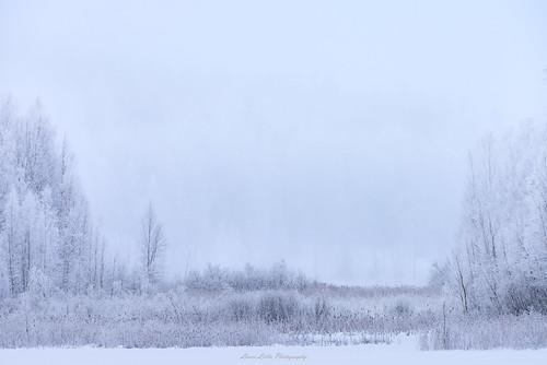 2018 jyväskylä kortesuo talvi suomi finland winter fog mist frozen tree forest lake snow ice nature landscape nikon d610 nikkor 200500mm telephoto amazing europe world photography outdoor