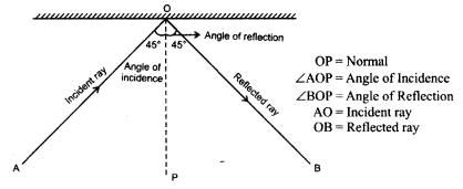 ncert-solutions-for-class-8-science-light-7
