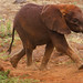 Feeding Time. Sheldrick Elephant Orphanage Nairobi by welloutafocus