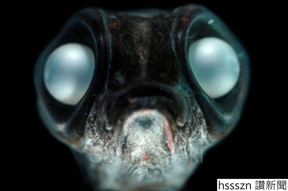 Große Augen, kleiner Mund
