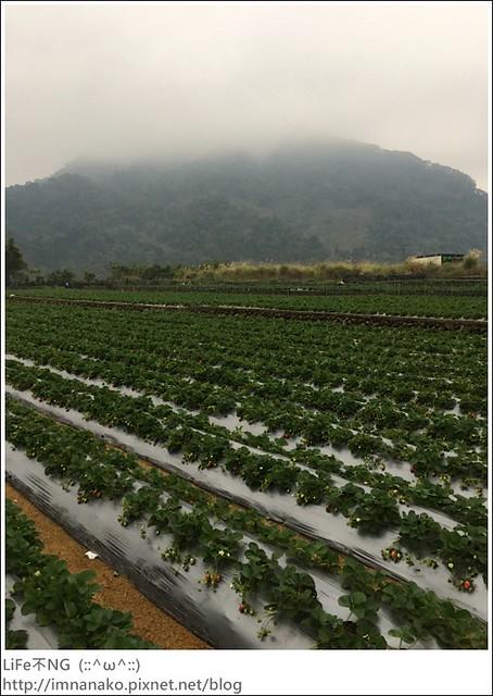 名品牛奶草莓園