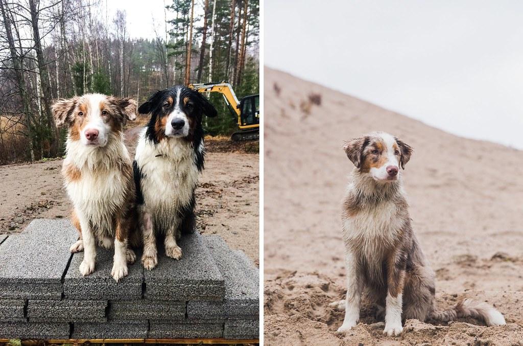 elämä kahden koiran kanssa-48-tile