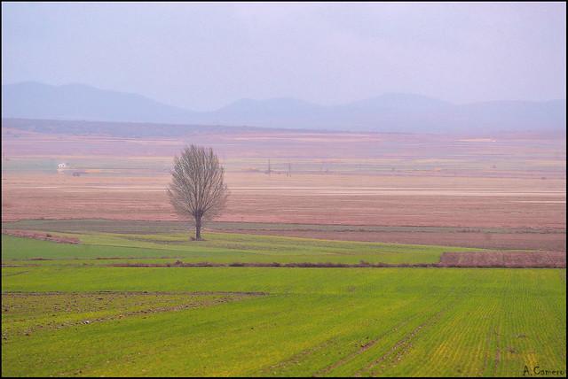La soledad en el paisaje.