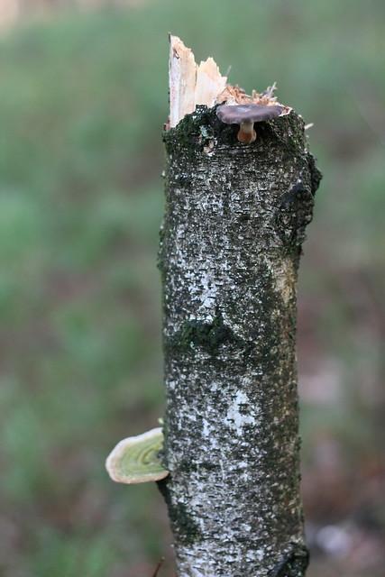 Afgebroken boom met paddestoelen