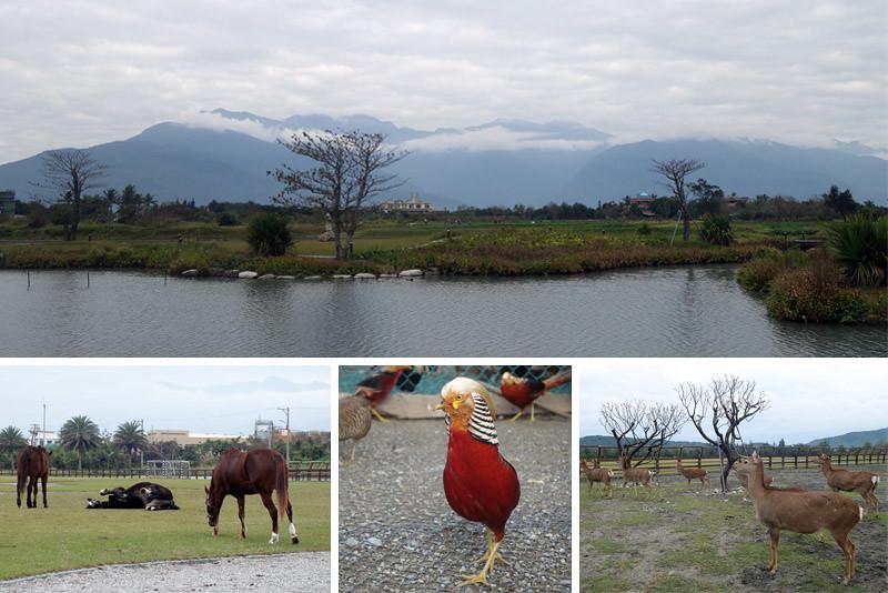 hualien farm