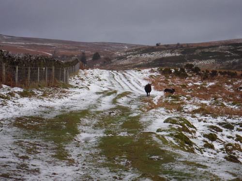 Along the fence up Mynydd Llangorse