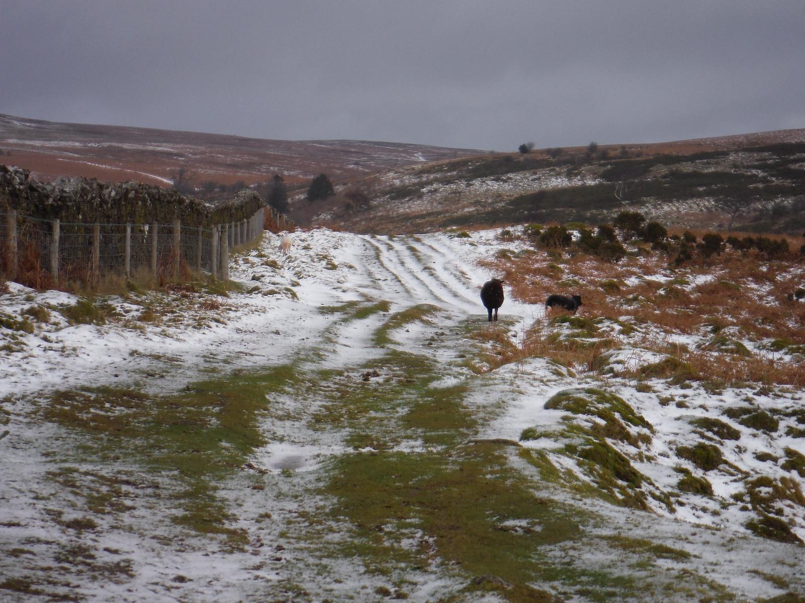 Along the fence up Mynydd Llangorse SWC Walk 308 - Bwlch Circular (via Mynydd Troed and Llangorse Lake)