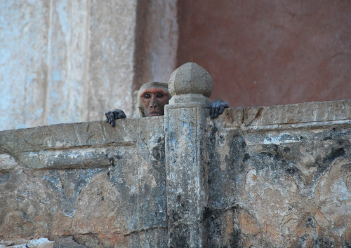 A monkey keeps a watchful eye over us at Bundi Fort in India