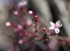 5/52 Spring