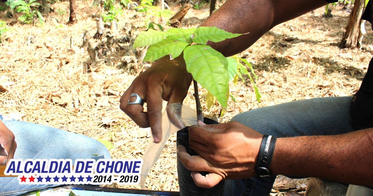 Alcaldía de Chone apuesta a la tecnificación agrícola