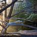 Cypress Sunbeams by Kirk Lougheed