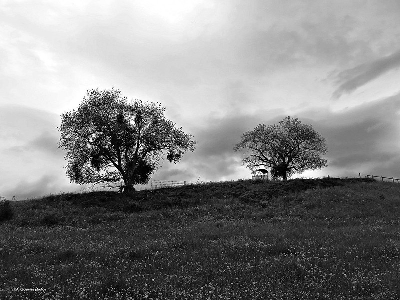 Trees, Feldbrunnen on a hill above the River Aar