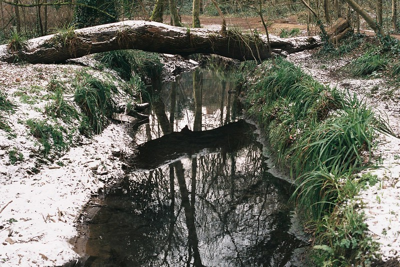 Trym reflections