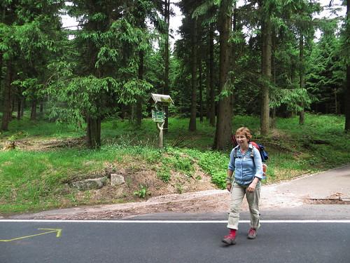 20170605 07 150 Regia Wald Straße Pilger ElisabethB