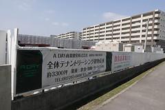 asooourasohinamatsuri001